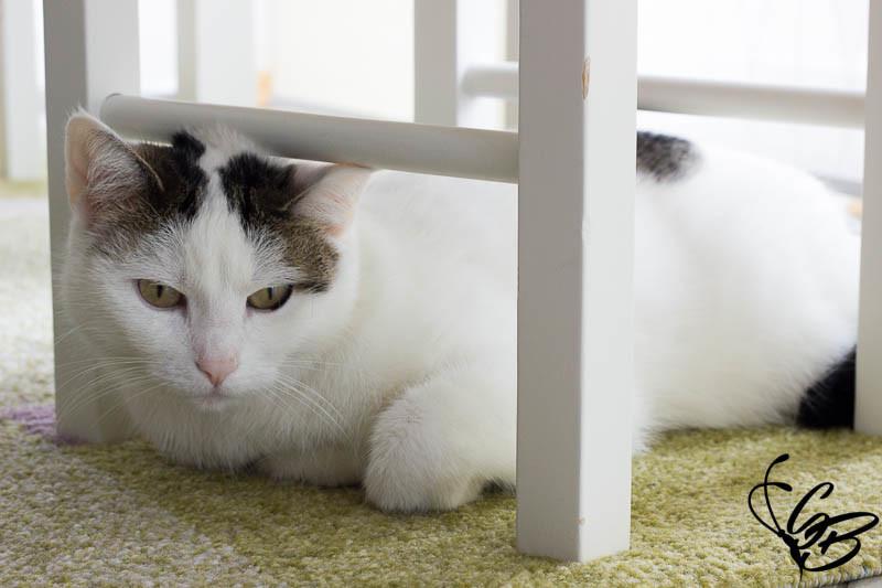 Mit ROYAL CANIN Fotoshooting für die Katze und mehr gewinnen - Tanja's Everyday Blog
