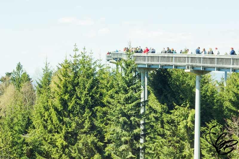 Waldwipfelweg - atemberaubender Ausblick auf den Bayerischen Wald - Tanja's Everyday Blog