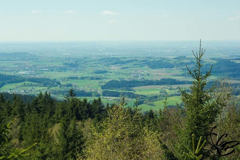 Waldwipfelweg Ausblick