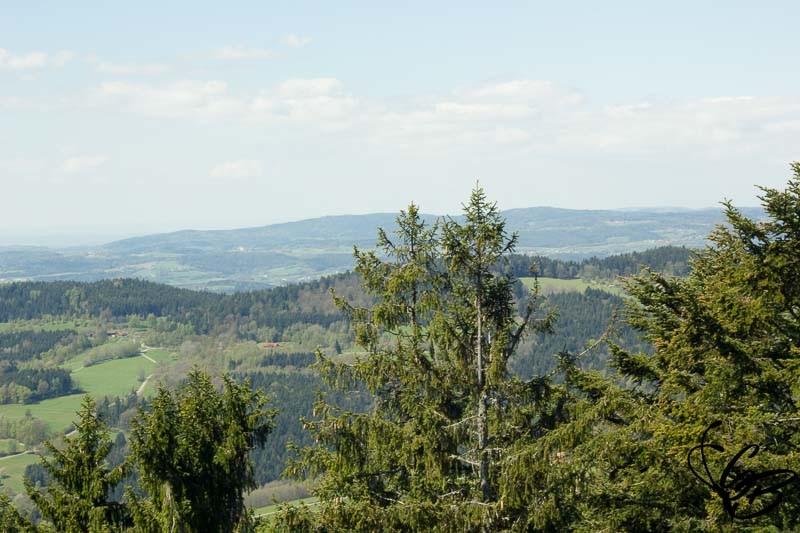 Waldwipfelweg Ausblick Bayerischer Wald